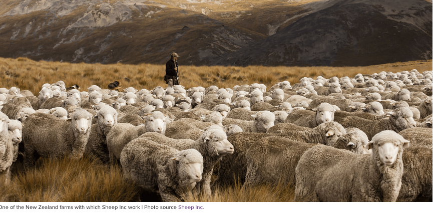 Buy The Clothing… And Adopt The Sheep