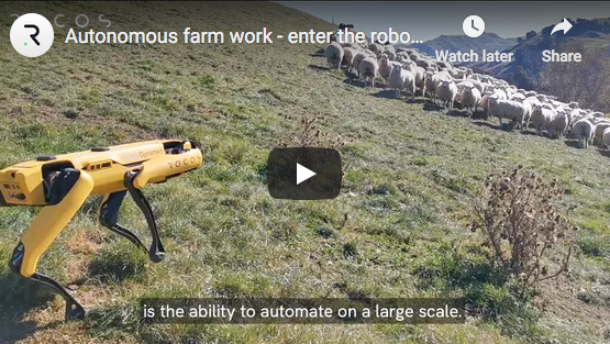 Robot Sheepdogs
